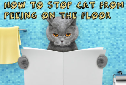 How to Stop Cat From Peeing on the Floor