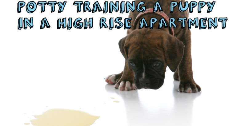 Potty Training a Puppy in a High Rise Apartment